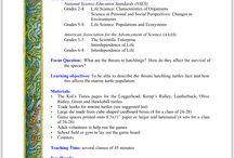 Sea Turtle Educational resources
