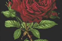 rose kristik