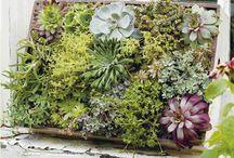 gardenlove