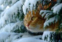 cats / by Diane Boren