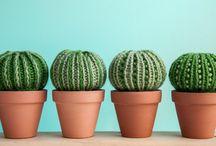 hačkované rastlinky
