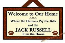 Jack Russells jj