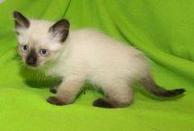 Adopt Me! Adoptable Pets