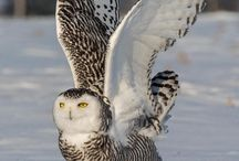 mooie uilen