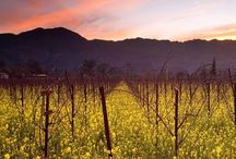 Travel - Wine Country