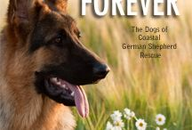About Finding Forever - A Book For A Cause / The heartwarming and profound book that dog lovers everywhere are talking about. 26 compelling stories take you into the hearts and minds of these amazing beings.