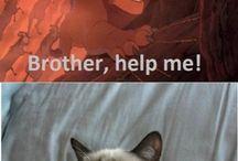 Grumpy cat / Cats