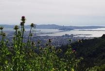 Favorite Parks / Great Bay Area Parks