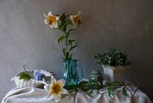 Claudia Stanetti. Still Life photography / This is about flowers in Still Life.