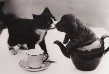gatinhos/ Cute cats / fotos de gatinhos fofos