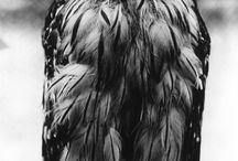 Owls - Twit twoo!