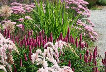 Planting Design / Inspirational planting combinations and design ideas.