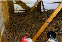 chicken coop ideas and tips.