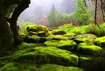 Moos-Wälder