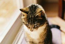 cute animals / by Sari Fraser