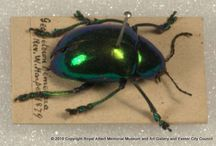 Beetles, Bugs and Beasties / From the natural history collection, RAMM's captured creepy crawlies
