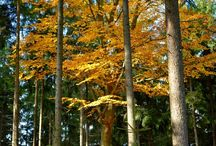 Nádherný podzim