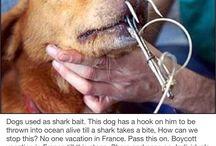 animal cruelty.WAKE UP