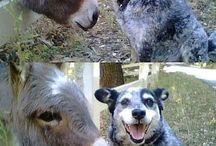 Donkey Note
