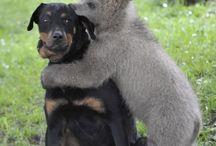 animales love