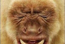 Funny animals / Funny animals / by Glod Viktor
