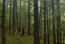 Foraging / Chef Nico Schuermans foraging near Squamich BC