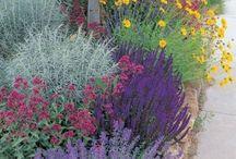 WILD FLOWERS / Seeds