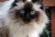 Meowterest / Meow meow meow meow meow meow meow / by Jessica Richardson