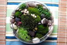 Green arrangement / すてきオブジェ