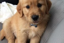Everything Dogs / Just everything dogs and cute puppies