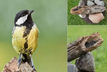 Photography - Backyard Bird Studios / How to set up your own backyard bird studio