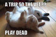 Funny little animals