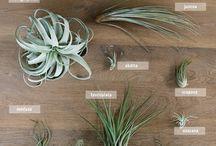 Plants air/ rośliny powietrzne