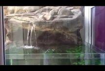 Cichlid Tanks