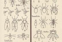 Mücken,  Käfer