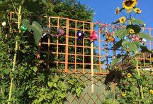 My flower garden photos