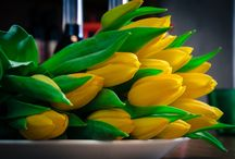 """Что подарить любимой на 8 марта? / Что подарить любимой на 8 марта? Подарите нечто особенное и оригинальное - профессиональную фотосессию """"LOVE STORY"""", """"Фотопрогулку по Праге"""" или же семейную фотосессию. И конечно же цветы))) Стоимость 2 часовой фотосессии 2000 крон. +420 775-38-11-24 www.fotoelena.com"""