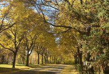Autumn / Autumn color