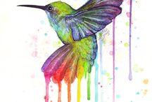 Kolibry/ptaki