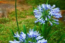 Ref: Plantas e flores