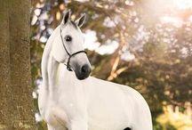 horses / cool pics of horses