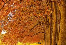 Wanderung durch den Herbst