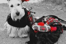 Scottish terriers & other dogs / Perros