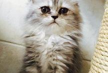 Kittens / Lovely pets