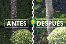 Antes y Después Jardines Verticales