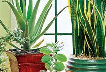 plants (house plants)