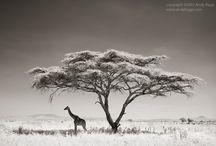 [value] Natural / - 木という自然の温もり -