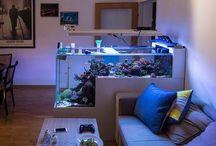 Reef aquariums idea
