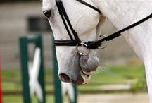 All Things Horse.  / by Susan Pack