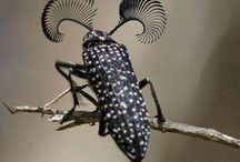 Hmyz, housenky, havěť